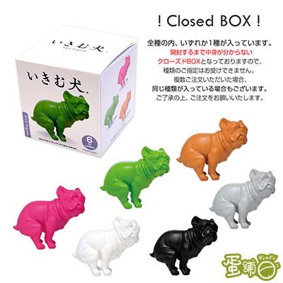 憋氣嗯嗯犬(BOX)-鬥牛犬