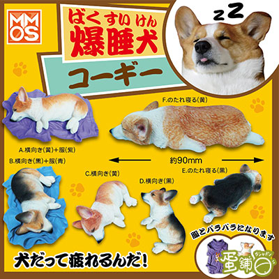 爆睡犬-黑色柯基犬-側睡(BOX)-D