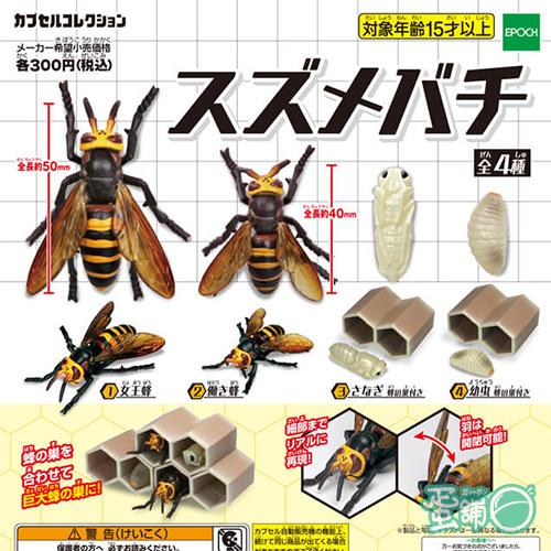 胡蜂模型與巢穴