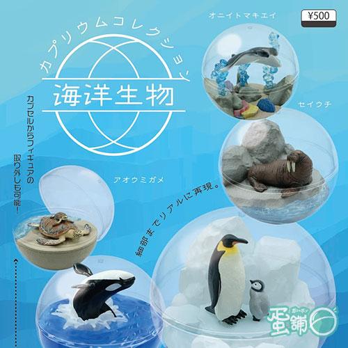 海洋生物盆景品