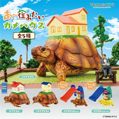 TAMA-KYU夢幻家居烏龜